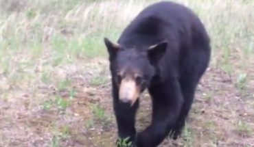 pnjLp0oHjKuk 370x215 Two Men Encounter a Black Bear during Workout (vid)